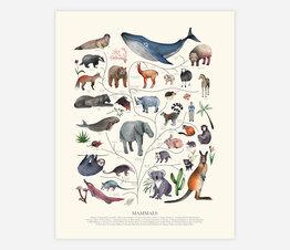 Tree of Life: Mammals (Beige)