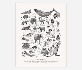 Tree of Life: Mammals (Black and White)