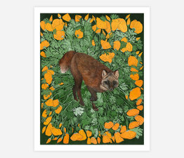 Sable Fox with California Poppies