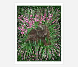 Wolverine with Fireweed