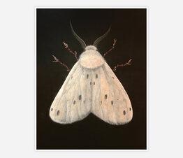Carrier, Tiger Moth