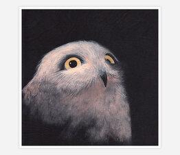Owlet Night