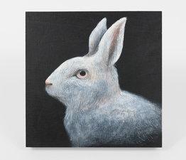 Rabbit, Night