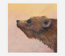 Sunrise Grizzly