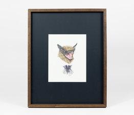 Bat / Black Bat Flower