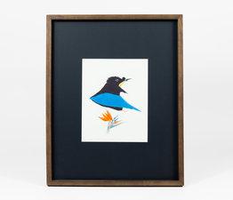 Blue Bird-of-Paradise / Bird of Paradise