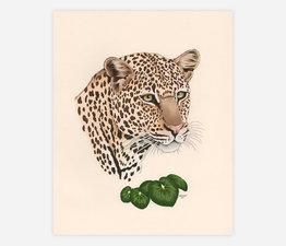 Leopard / Leopard Plant