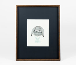 Lop Eared Rabbit / Big Ears