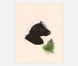 Skunk / Skunk Weed