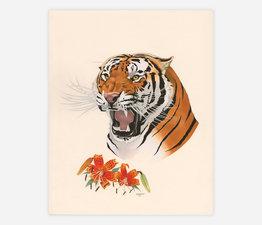 Tiger / Tiger Lily