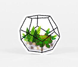 Hexagon Terrarium