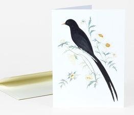 Black Winged Bird of Paradise