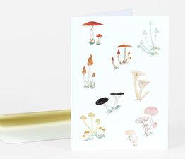 Ivo's Mushrooms