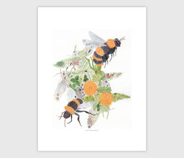 Bees, Bugs and Spring Things