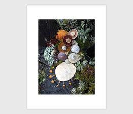 Mushroom Medley on Forest Stump