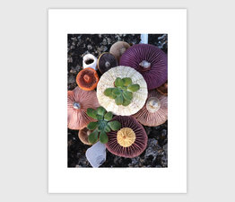Mushroom Medley on Sea Rock