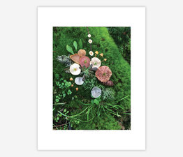 Mushroom Medley on Spring Growth