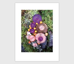 Mushroom Medley Purple on Green