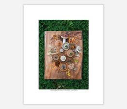 Mushroom Medley Winter Collection