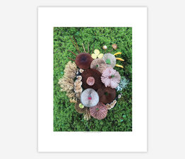Mushroom Medley with Corals and Needles