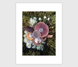 Mushroom Medley with Reindeer Lichen
