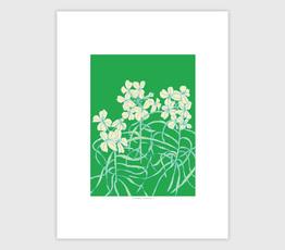 Pine Wallflower