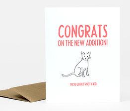 New Addition Cat