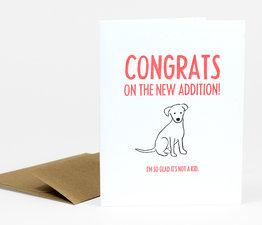 New Addition Dog